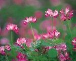 Demo Flower 3