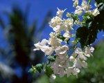 Demo Flower 12